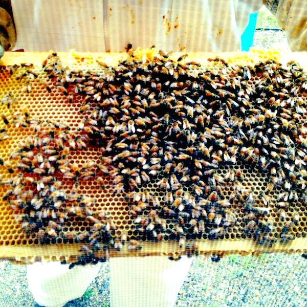 raw, unpasturized honey